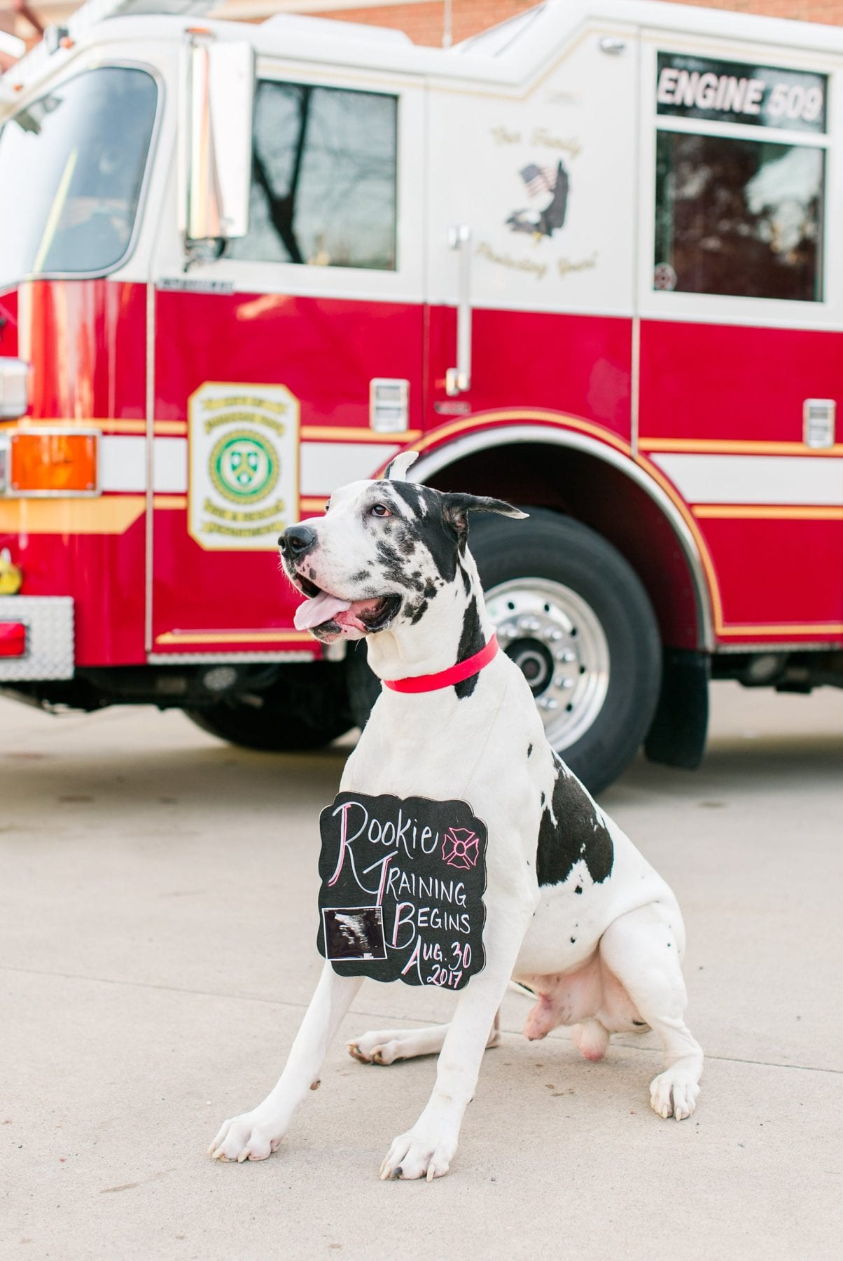 Firefighter Baby Announcement Virginia Photographer Megan Kelsey Photography Jeromy & Becky-65.jpg