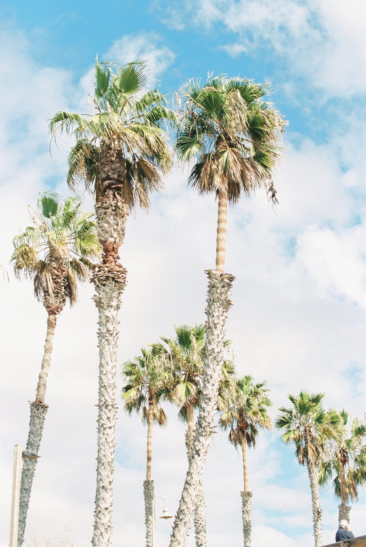 Southern California on Film Megan Kelsey Photography-30.jpg
