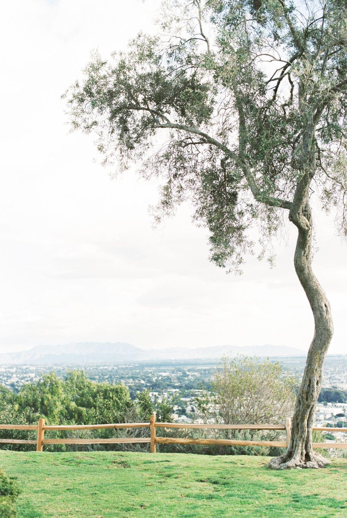 Southern California on Film Megan Kelsey Photography-50.jpg