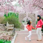 Washington DC Family Photographer | Cherry Blossom Family Portraits| Jessica & Isabel