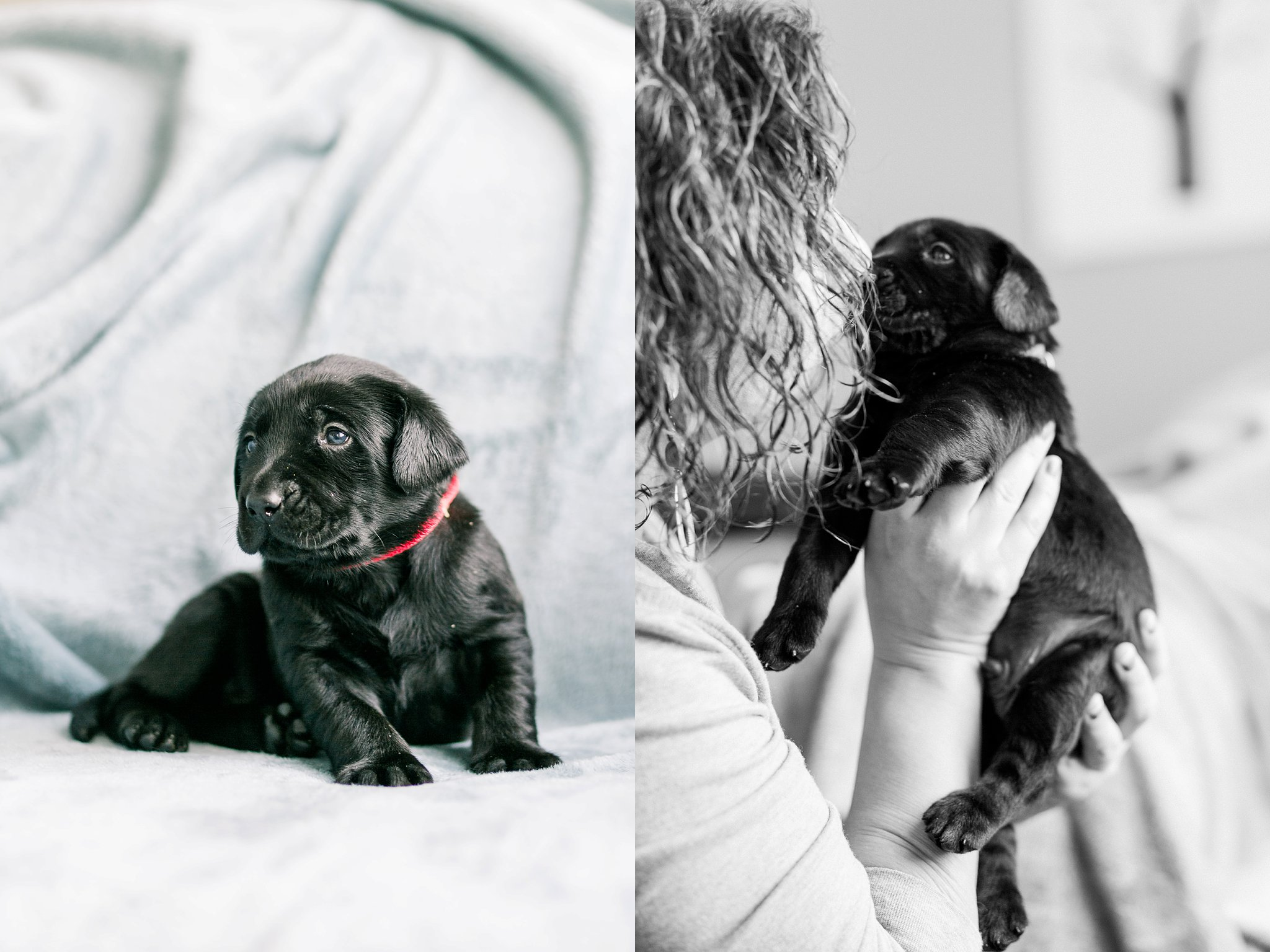 Indiana Puppy Photographer Megan Kelsey Photography Jenny's Puppies-8_photo.jpg